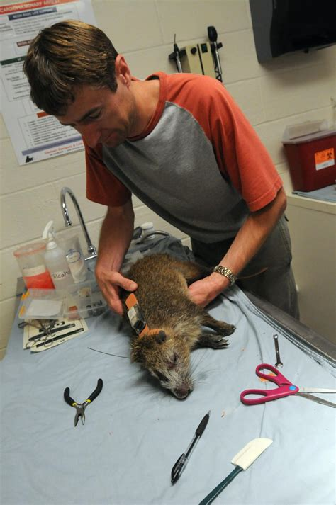 DVIDS - Images - Experts Track GTMO Wildlife