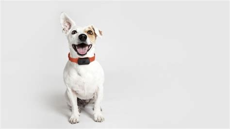 Best dog GPS, pet activity monitors and tracking collars