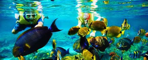 Snorkeling and Dive in Mauritius - Mauritius Surf Holidays