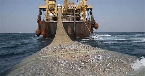 Mauritania moves to stop overfishing   Africanews