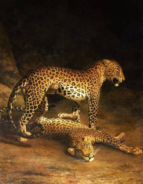 File:Agasse, Jacques-Laurent - Two Leopards Lying in the