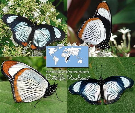 ID Guide: Gray & White Butterflies – Exhibits